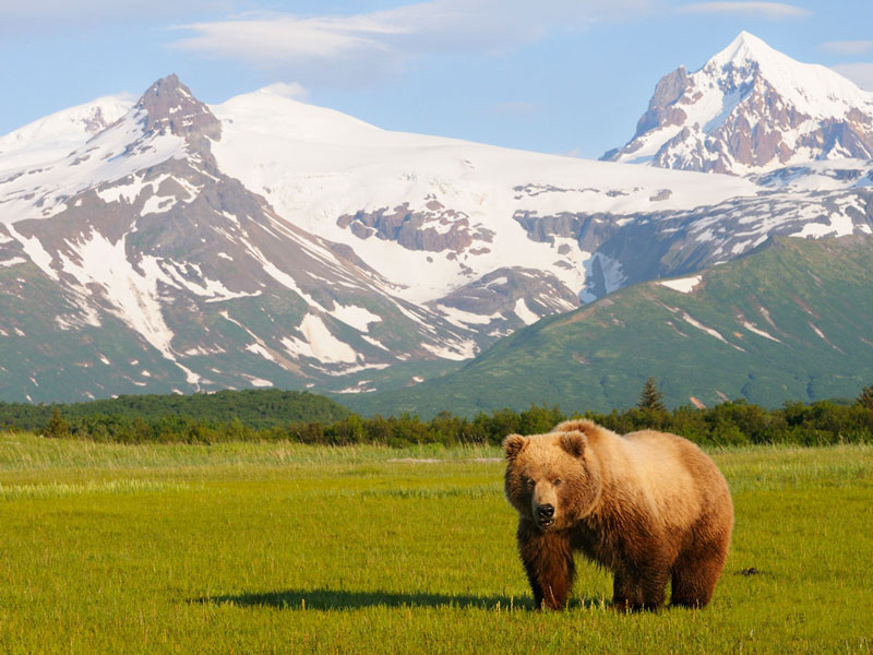 Alaska Cruise and Land Tour | Anchorage Denali Highlights | Optional Grizzly Bear Viewing
