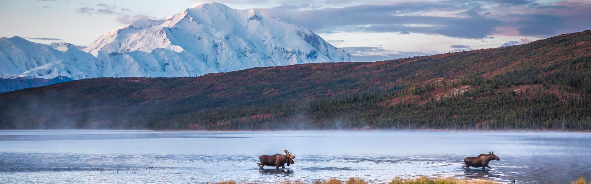 Denali National Park Train Tours
