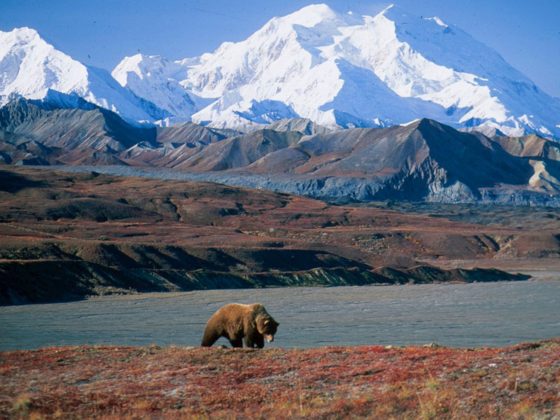 Alaska Denali Train Tour | Denali National Park
