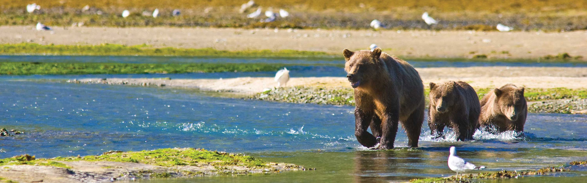 Katmai National Park | Alaska Bear Viewing Excursions