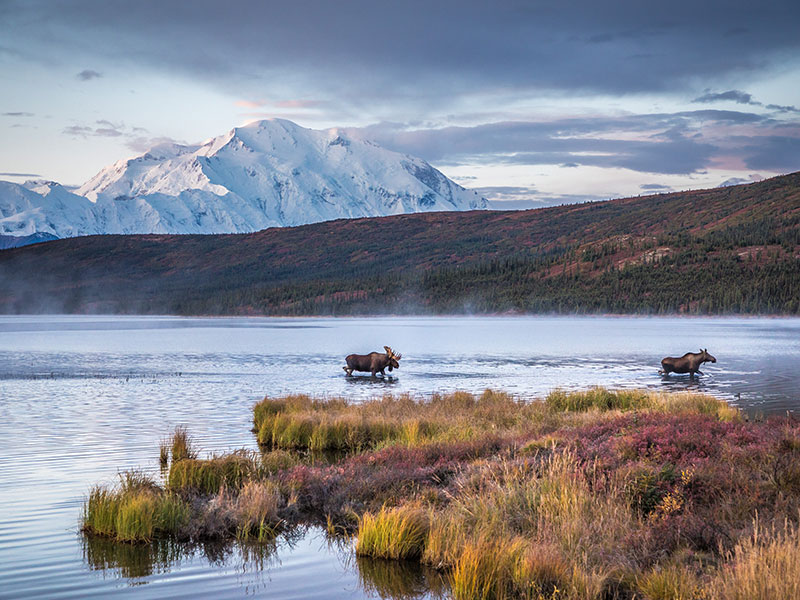 Alaska Cruise and Land Tour with Denali & Canadian Rockies | Denali National Park