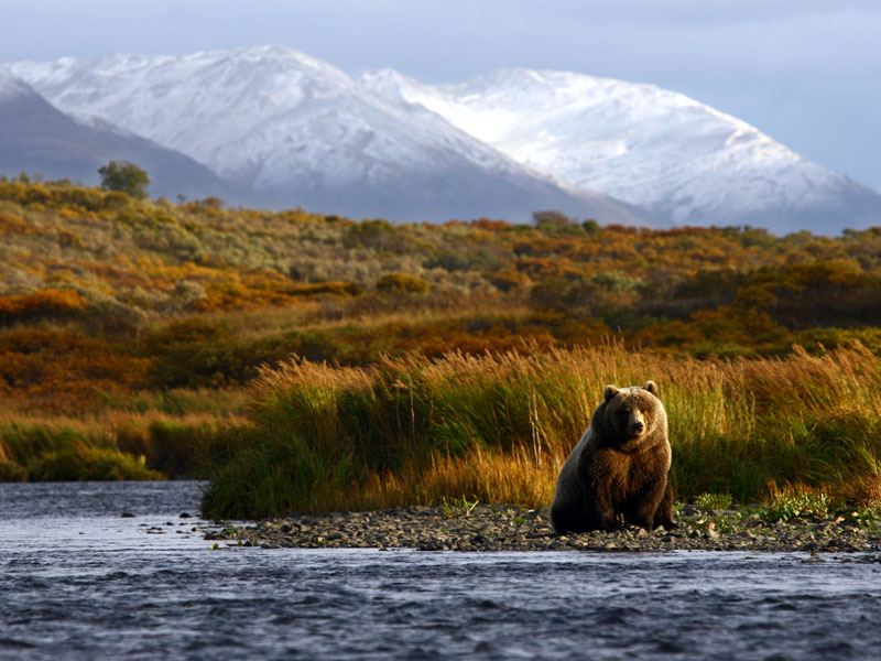 Denali Kenai Alaska Train Explorer Tour | Grizzly Bear Denali National Park